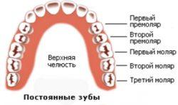 Какие зубы принято называть молярами